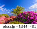 富士山 葛城山 花の写真 38464461