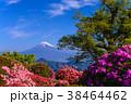 富士山 葛城山 花の写真 38464462
