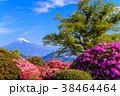 富士山 葛城山 花の写真 38464464