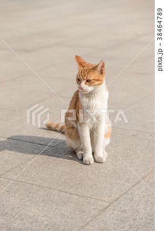 お座りしている猫  38464789