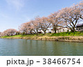 川 秋 桜の写真 38466754