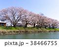 川 秋 桜の写真 38466755