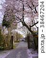 瑞龍寺側 桜 38467204