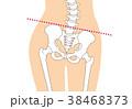 骨格 骨 人体のイラスト 38468373