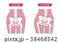 人体骨格 腰部 ピンク 38468542