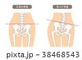 人体骨格 腰部 肌色 38468543