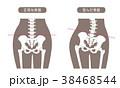 人体骨格 腰部 茶色 38468544