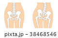 骨格 骨 人体のイラスト 38468546