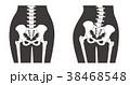 骨格 骨 人体のイラスト 38468548