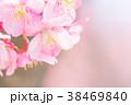 河津桜 花 ピンクの写真 38469840