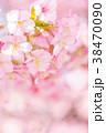 河津桜 花 ピンクの写真 38470090
