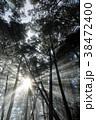 朝日 光芒 朝霧の写真 38472400
