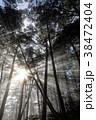朝日 光芒 樹林の写真 38472404