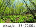 森林 森 風景の写真 38472661