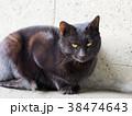 猫 黒猫 野良猫の写真 38474643