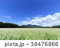 蕎麦 蕎麦畑 長野の写真 38476866