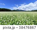 蕎麦 蕎麦畑 長野の写真 38476867