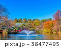 東京 井の頭公園の紅葉 38477495