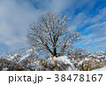 雪 木 樹木の写真 38478167
