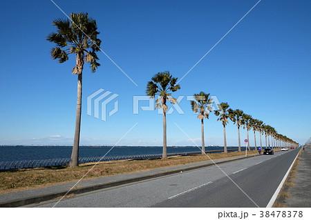 袖ケ浦海浜公園のヤシの木のある道路 38478378