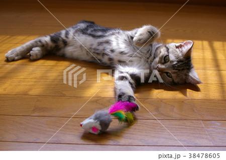 とら次郎 子猫2(猫じゃらし) 38478605