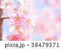 河津桜 花 ピンクの写真 38479371