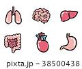 ベクター 内臓 臓器のイラスト 38500438