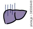 ベクター 内臓 臓器のイラスト 38500449
