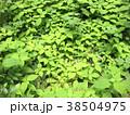 植物 自然風景 38504975