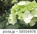 植物 自然風景 38504976