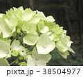 植物 自然風景 38504977