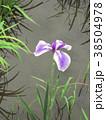 植物 自然風景 38504978