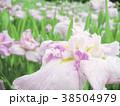 植物 自然風景 38504979