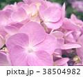 植物 自然風景 38504982