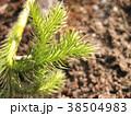 植物 自然風景 38504983