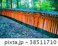京都 伏見稲荷 伏見稲荷大社の写真 38511710