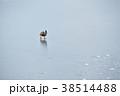 北海道 大沼公園 沼の写真 38514488