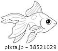 塗り絵 魚 淡水魚のイラスト 38521029