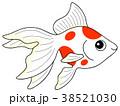 魚 魚類 淡水魚のイラスト 38521030