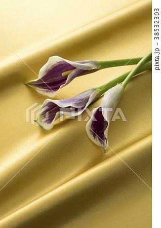 金色のサテンと紫色のカラー 38532303