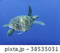 パンゴラオのウミガメ 38535031