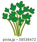 イタリアンパセリ 野菜 38536472