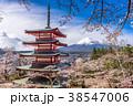 日本 季節 春の写真 38547006