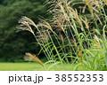 秋_山村のススキ 38552353