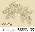 コーヒー コーヒー豆 実のイラスト 38553135