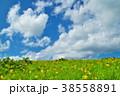 ニッコウキスゲ 花 高原の写真 38558891
