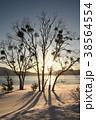 宿木と田沢湖夕景(冬) 38564554