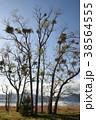 宿木と田沢湖(秋)(縦1) 38564555