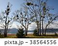 宿木と田沢湖(秋)(横) 38564556
