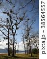 宿木と田沢湖(秋)(縦2) 38564557